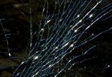 Один человек погиб, один ранен в столкновении ВАЗа и трактора под Воронежем