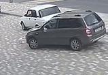 Воронежцы просят наказать водителя, переехавшего кота специально