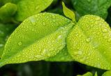 Первые выходные августа в Воронеже будут дождливыми
