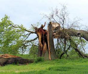 Синоптики предупреждают воронежцев о сильном ветре