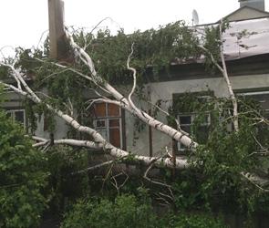 Мощный ветер поломал и обрушил в Воронеже несколько деревьев