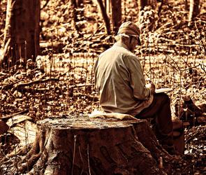 В лесу под Воронежем заблудились двое пенсионеров – грибников