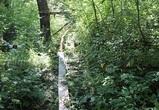 Под Воронежем уничтожили русло реки на территории заказника