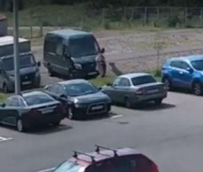 Нападение собаки на девушку во дворе «Скандинавии» попало на видео