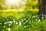 Выходные в Воронеже будут солнечными и теплыми