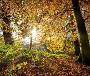 Первая неделя сентября в Воронеже будет теплой