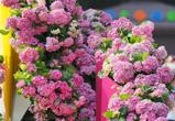 Воронежцы почувствуют красоту цветов на IX международном фестивале «Город-Сад»