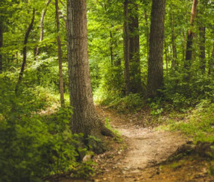Пропавшую в Воронеже 10-летнюю девочку нашли в лесу