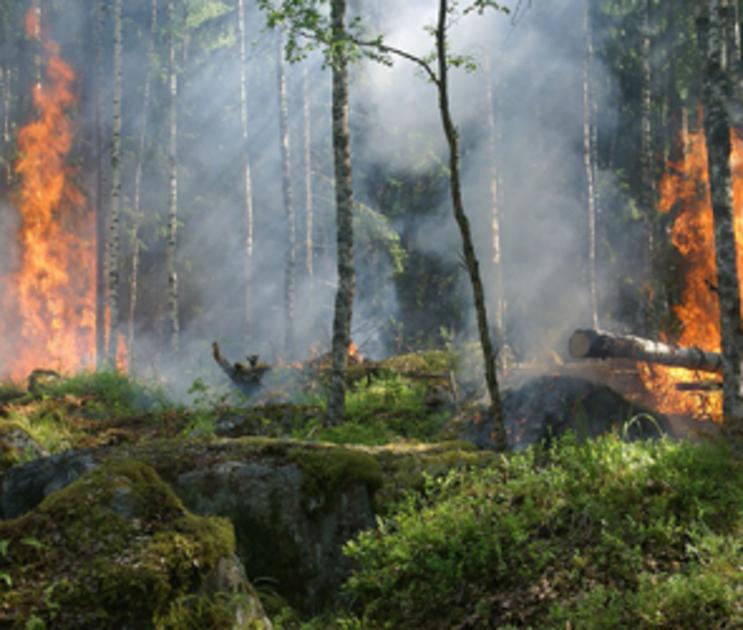 В 12 районах Воронежской области объявлена чрезвычайная пожароопасность