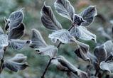 В Воронежской области объявили «штормовое предупреждение» из-за заморозков