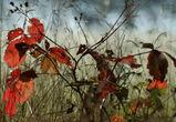 Дождливые и холодные выходные обещают воронежцам