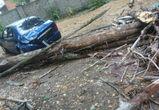 В Воронеже дерево раздавило иномарку