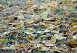 В Воронежской области похолодает до -2°C