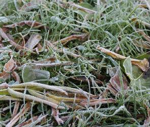 Воронежцев предупреждают о ночных заморозках
