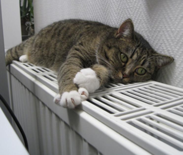 Стало известно, когда в Воронеже пустят тепло в объекты социальной сферы