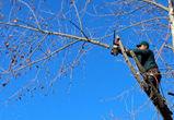 В Воронеже рабочие, обрезавшие деревья, сорвались с высоты