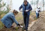 Владимир Нетёсов поучаствовал в высадке деревьев на месте сгоревшего леса