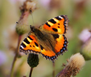 В Воронеже и области из-за теплой погоды активизировались ужи и бабочки