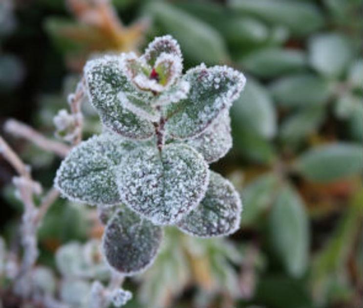 В последний день октября в Воронеже похолодает до -2 градусов