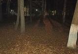 Потерявшийся в Воронежской области пенсионер ночевал в лесу