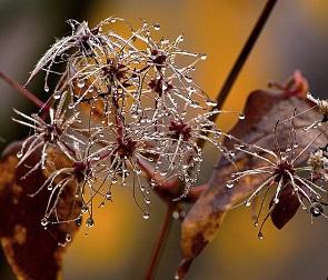 Дождливую и теплую погоду обещают воронежцам на короткой рабочей неделе