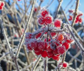Воронежцев ждут прохладные выходные с заморозками