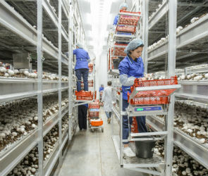 В Воронежской области растет количество рабочих мест