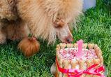 Хвостатые гурманы: в Воронеже открылась первая кондитерская для животных