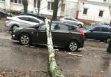 Упавшее дерево повредило две машины в Воронеже