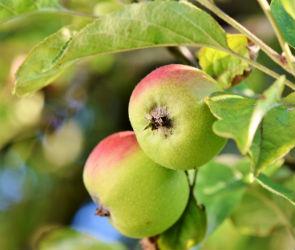 Жители Воронежа собираются выйти на митинг против застройки яблоневого сада
