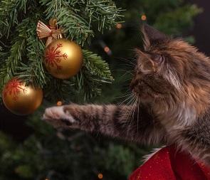 В Воронежской области 31 декабря могут сделать выходным днем