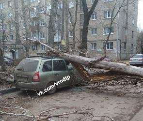 Из-за сильного ветра в Воронеже на женщину упало дерево