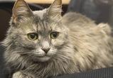 Умерла кошка Лиза – символ Воронежского госуниверситета