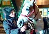 Сирийского шейха, ведущего лошадь Путину, заметили под Воронежем