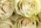 В Воронеже парень украл 40 белых роз для своей возлюбленной