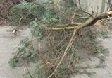 Молодые воронежцы спилили три дерева в Ботаническом саду