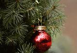 Воронежцам предлагают сдать новогодние елки на переработку и получить подарки