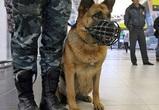 В Воронеже служебная собака помогла раскрыть преступление