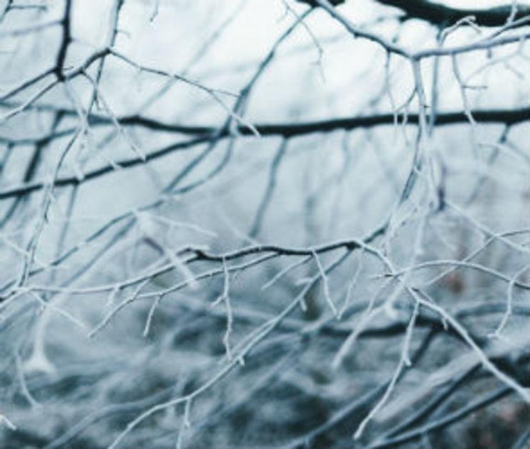 Небольшой мороз, снег и дождь прогнозируют на выходных в Воронеже