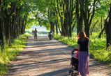 Жителям Воронежа предлагают проголосовать за обустройство парковых зон