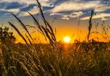 В Воронежской области хотят привлечь фермеров на неиспользуемые земли