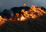 В Воронежской области особый противопожарный режим введут на две недели раньше