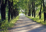 Воронежцам объяснили, как будут закрываться городские парки
