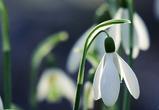 Синоптики: в начале апреля в Воронеж вернутся морозы