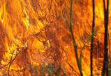 Особый противопожарный режим в воронежском регионе введут 1 апреля