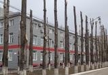 Блогер Илья Варламов возмутился варварской обрезкой тополей в Воронеже
