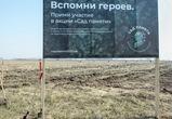 Под Воронежем высадили абрикосовые сады