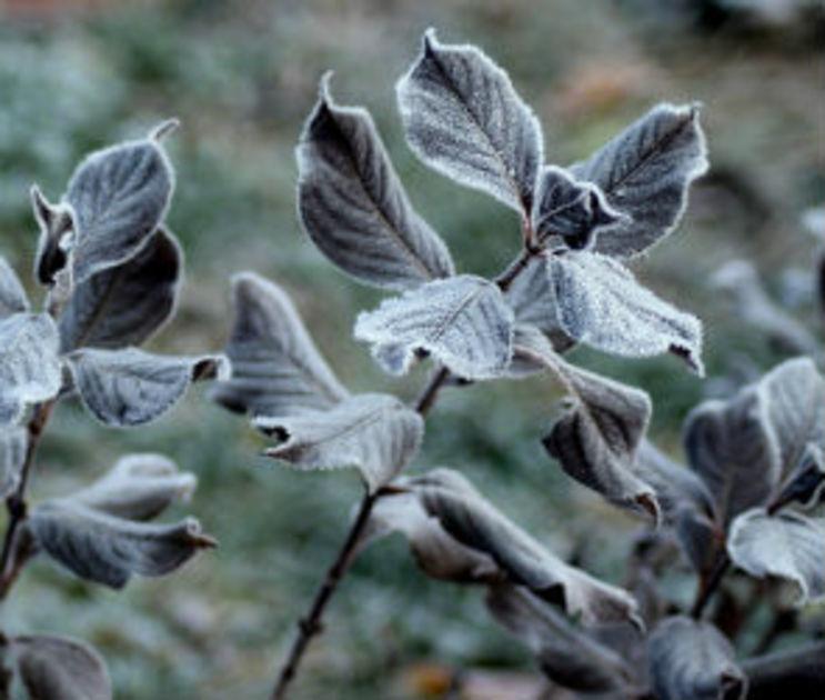 В Воронежской области из-за заморозков объявлено штормовое предупреждение