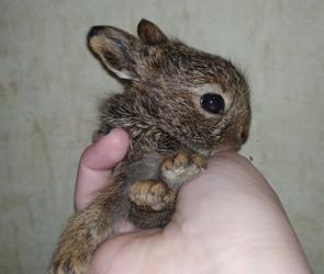 В Воронеж из Тамбова привезли новорожденную зайку, попавшую под газонокосилку