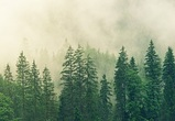Работа лесных инспекторов усилена в Воронежской области во время пандемии